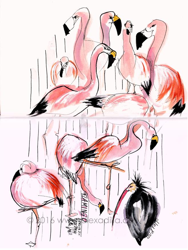 1602_flamingos